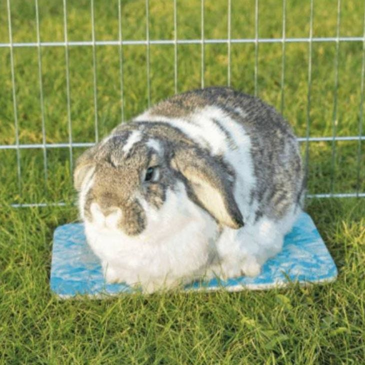 Trixie Cooling Plate - Pet, Small Animals